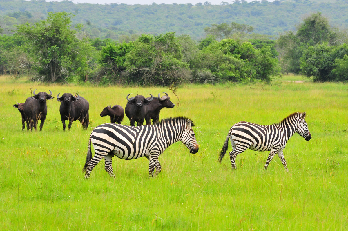 wildlife on 2 days Lake Mburo safari
