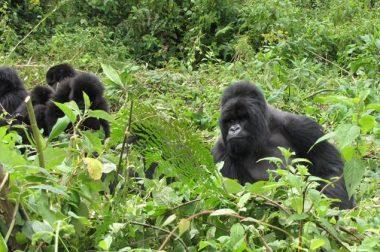 Uganda Safari Trek