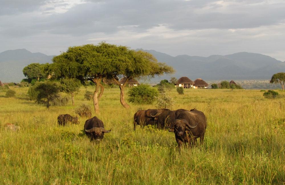 luxury Uganda safari in Kidepo park