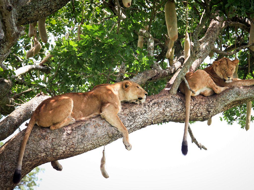 13 Budget Uganda Safari