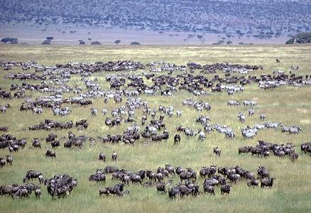 Serengeti wildlife during 14 days East Africa safari