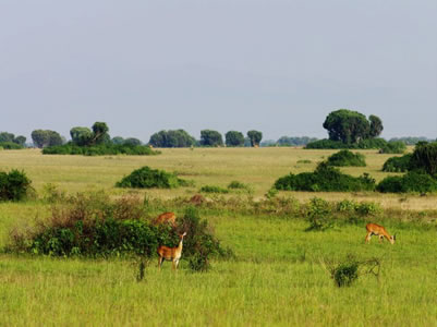 safari to Bwindi and Queen Elizabeth