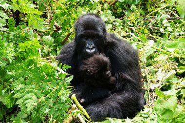 5 Days Rwanda and Uganda