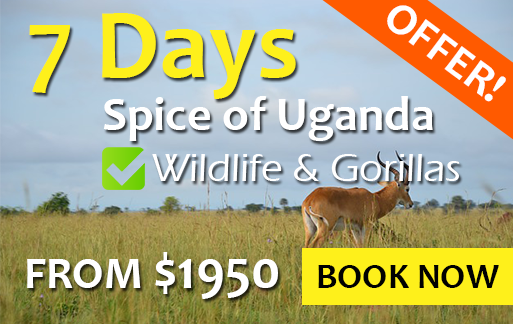 7 days best of Uganda tours
