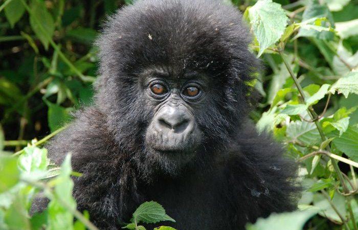 7 Days affordable primate safaris