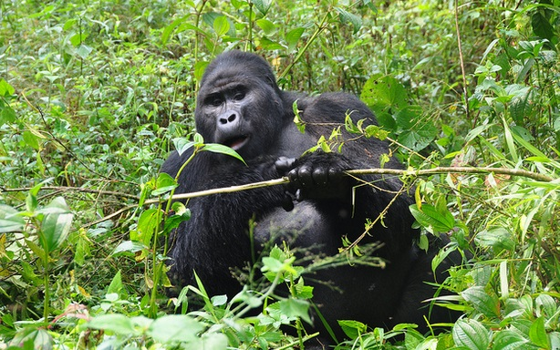 4 Days Bwindi Gorilla Tour