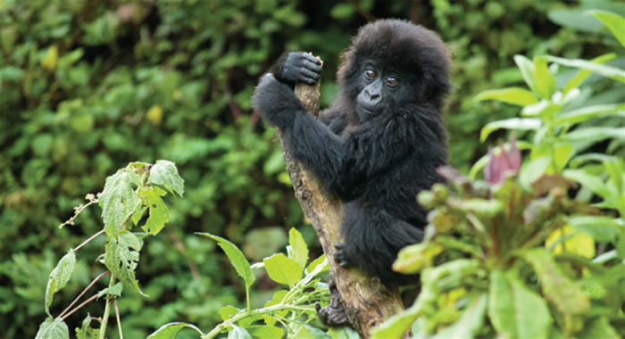 3 Days Bwindi Gorilla Tour