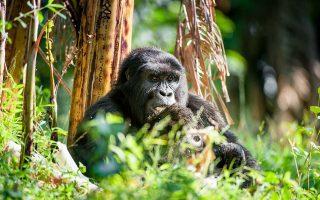4 Days Rwanda Gorillas & Nature