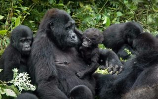 15 Days Best of Uganda Gorillas