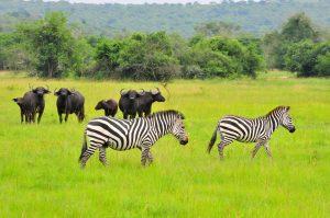 2 days Lake Mburo safari