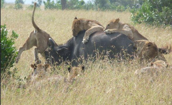 12 Days Kenya Safari