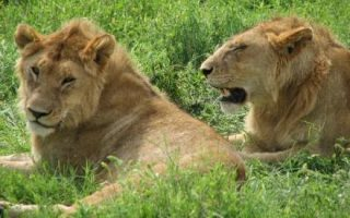8 Days Tanzania Safari