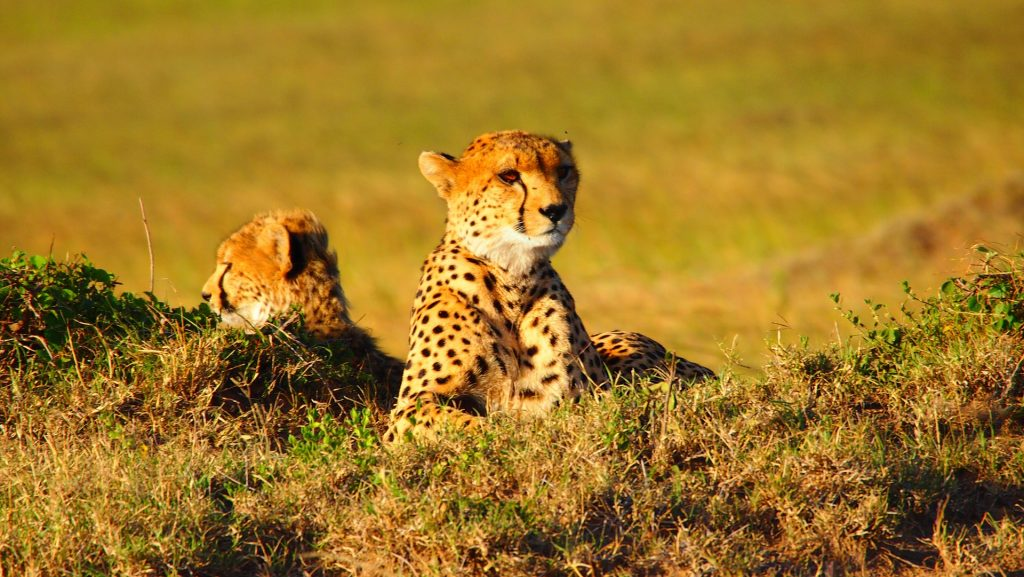About Achieve Global Safaris Ltd