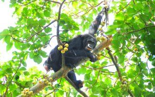 8 Days Uganda Gorillas