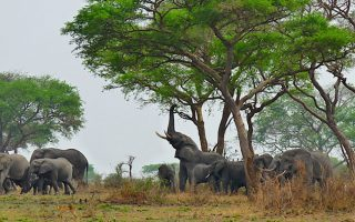 3 Days Queen Elizabeth National Park Safari