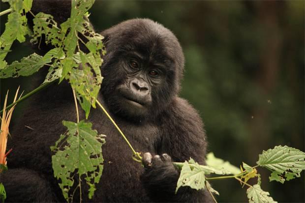 4 Days Rwanda Gorilla