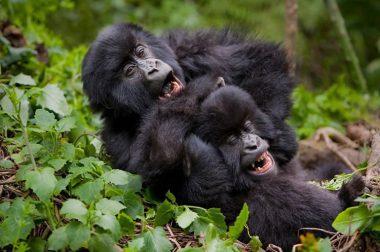 6 Days Uganda Gorillas Safari