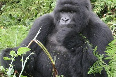 10 Days Rwanda Safari