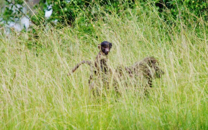 7 Days Uganda Luxury Wildlife Safari