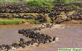 14 Days Gorilla Trekking Safari