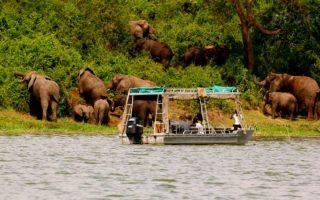 Best Places for Wildlife Viewing