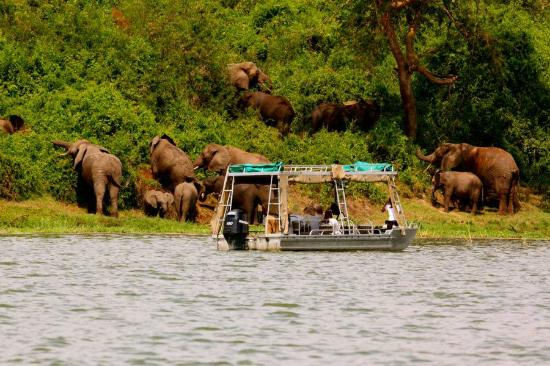 Kazinga Channel Boat Cruise in Queen Elizabeth National Park