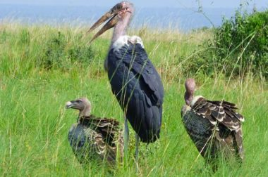 What to Pack for your next Birding Adventure in Uganda