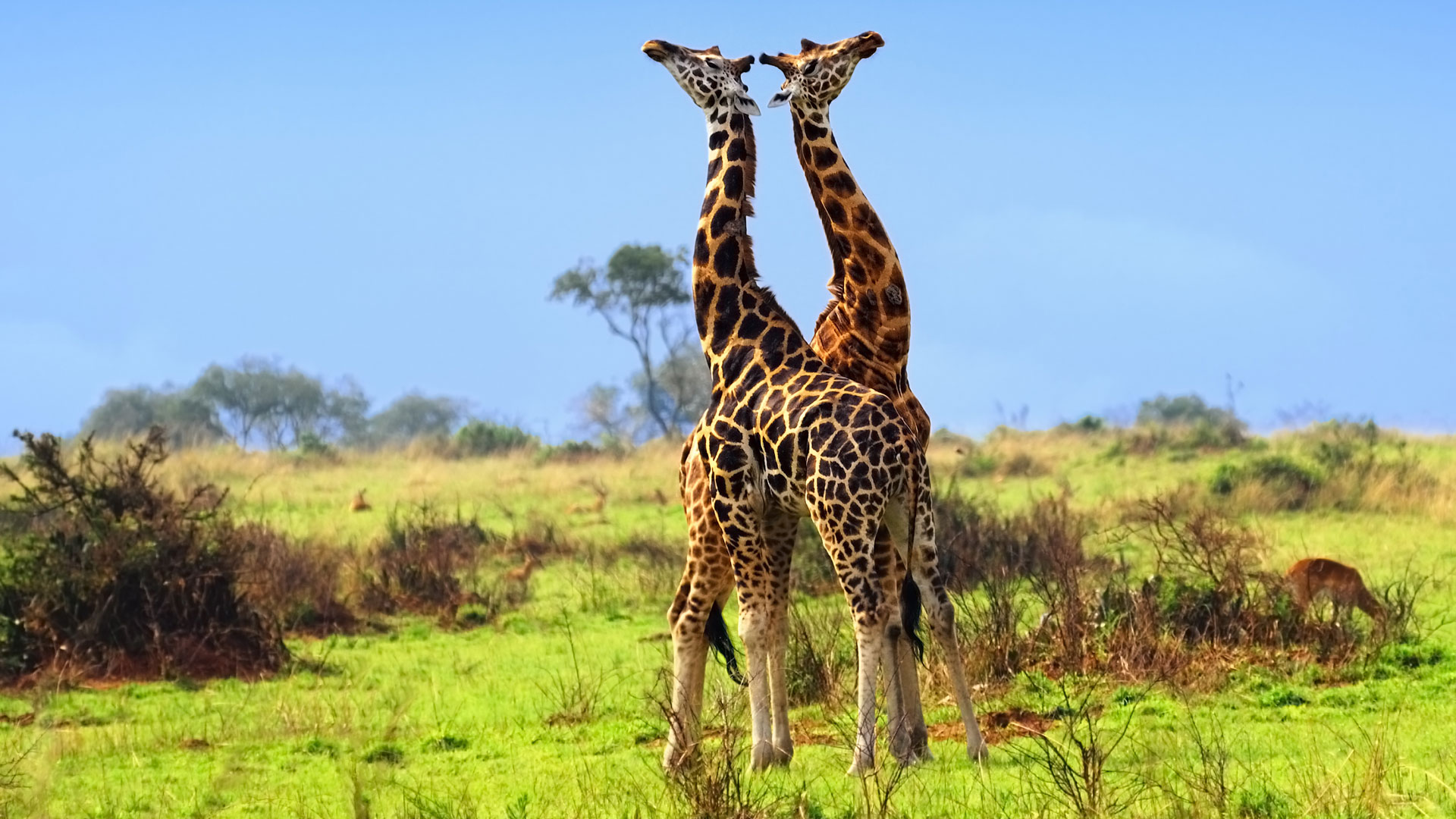 What To Expect On A Safari Holiday In Rwanda And Uganda