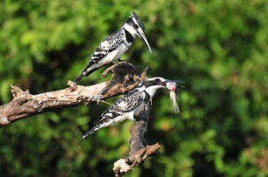 Uganda Birding Tips