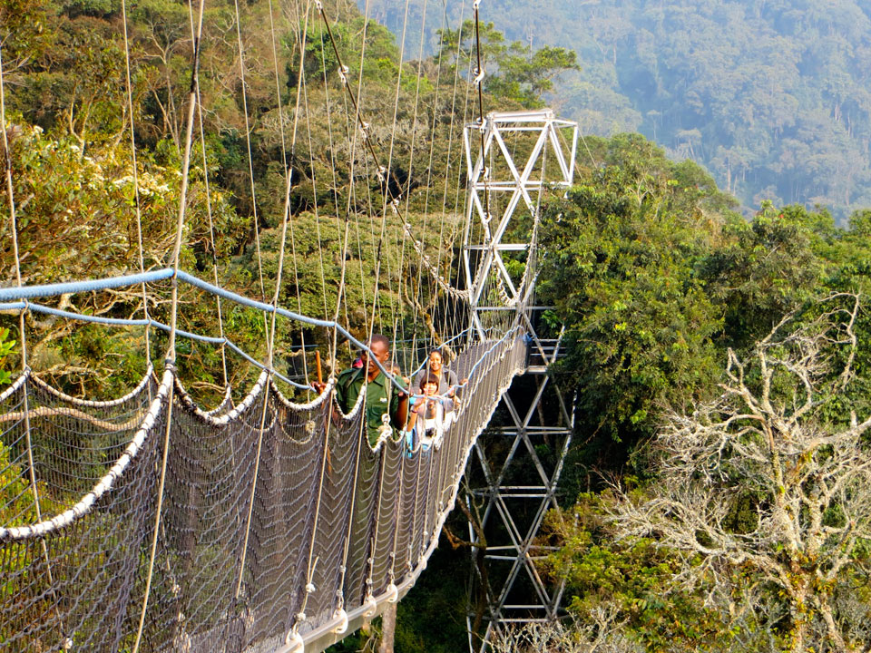 Canopy-Walk-Chimpanzee-Tracking-Nyungwe-Forest-National-Park-Rwanda-2