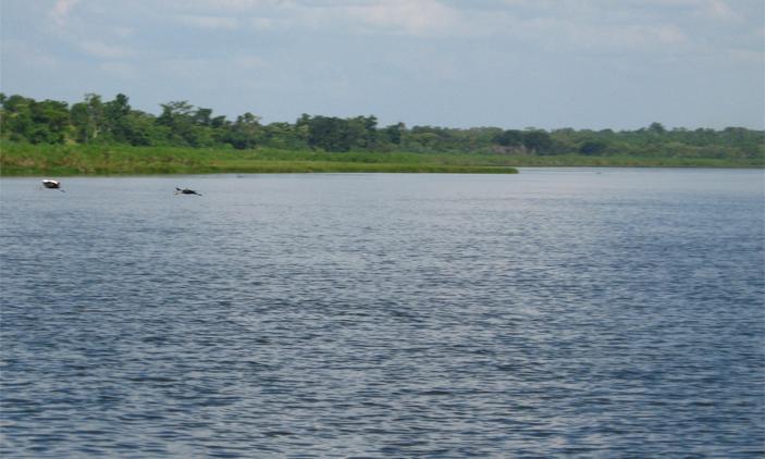 The Swampy Lake Kyoga In Uganda