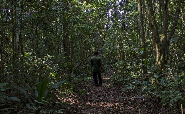The Zika Forest in Entebbe, Uganda