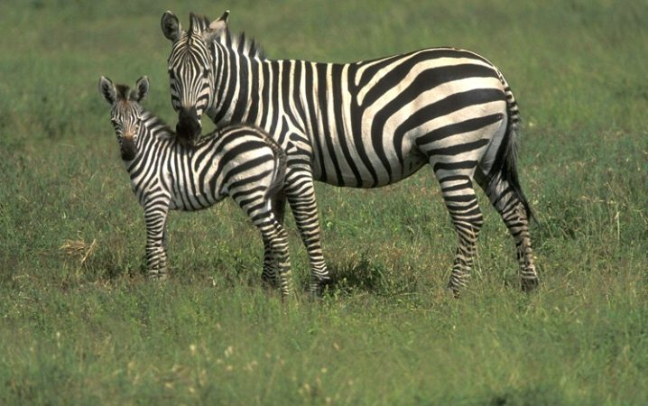 Africa Wildlife Viewing Tips