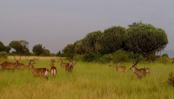 Bokora Game Reserve