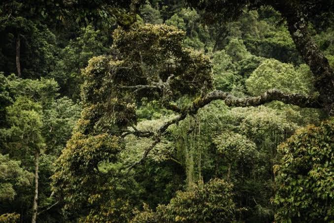 Gishwati Mukura forest : Rwanda's 4th National Park