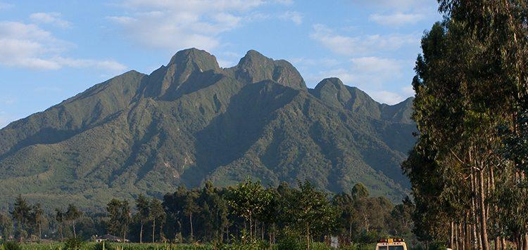 mountain karisimbi the highest of all the virungas
