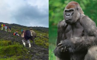 4 Days Congo Gorillas and Nyiragongo Hike