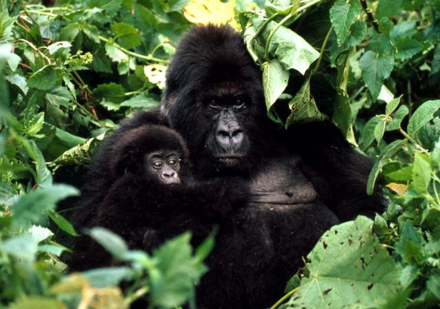 3 Days Virunga National Park
