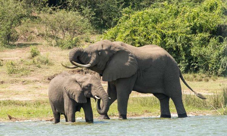 18 Days Uganda Safari