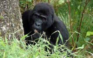 20 Days Uganda, Rwanda and Tanzania Safari