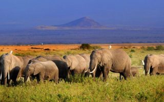 6 Days Amboseli national park and Maasai Mara national park