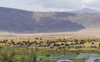 6 Days Tanzania Safaris