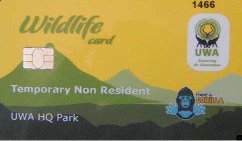 Getting a gorilla permit in Uganda
