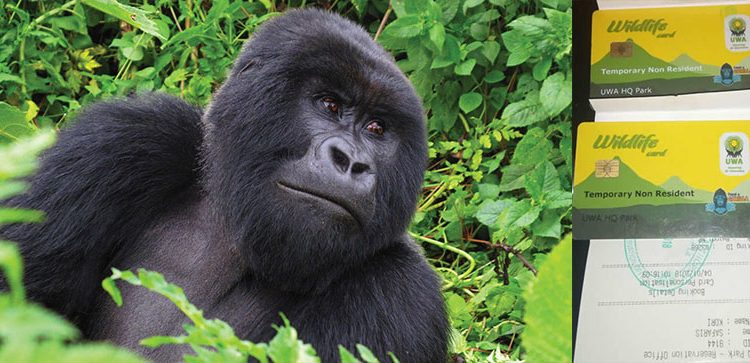 Prices of Gorilla Trekking Permits Increased