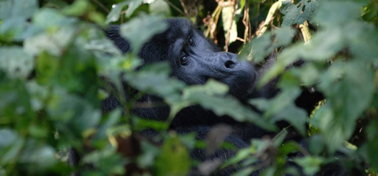 Getting a gorilla trekking permit in Rwanda