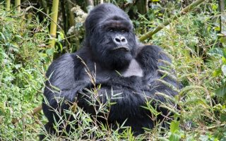 Virunga National Park