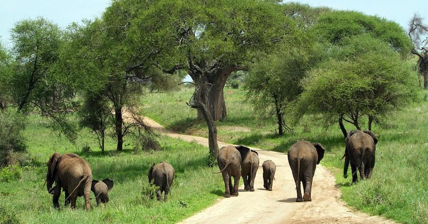 Wildlife in Kidepo National Park