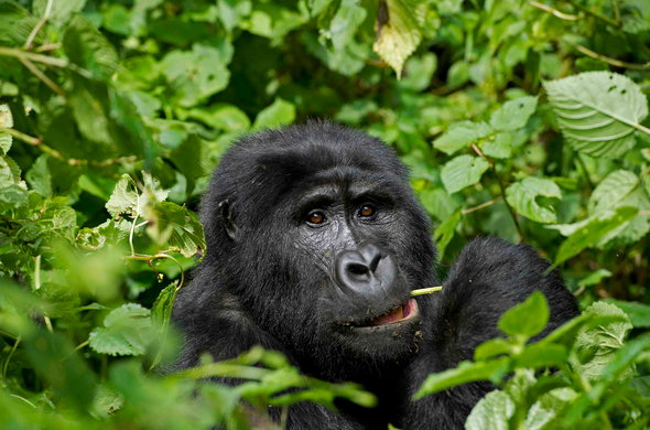 Bwindi Impenetrable National Park Weather