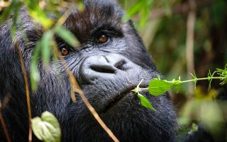8 Days Uganda Safari Tour