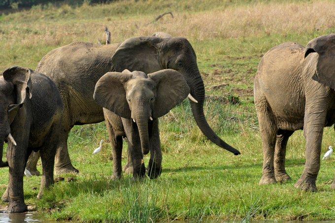 5 Days Murchison Falls & Jinja Safari